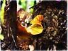 Nap Time (Ruth Nicholas) Tags: curlyfallleaf richcolors texturedbark macro depthoffield naturepatterns goldenleaf earthycolors woods