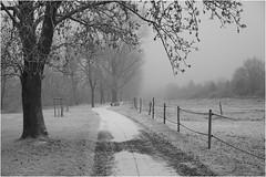 Sony *323 (KKS_51) Tags: sonyalpha7ii industrieschnee winter main höchst frankfurt
