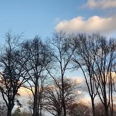 Central Park pre-sunset (the queen of subtle) Tags: newyorkcity newyork winter 2016 centralpark