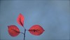 Red and Blue (Edinburgh Photography) Tags: nature outdoors leaves red blue water leith nikon d7000