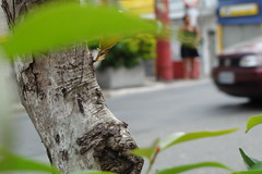 (Luiz Franco Jr.) Tags: city cidade sky woman macro tree verde green folhas leaves car buildings casa sopaulo mulher cities cu sampa spy collapse carro urbano arvore ruas urbane currents cidades predios correntes espio marries naturezaurbana selvadepedras luizfrancojr junglefromstones urbanenature