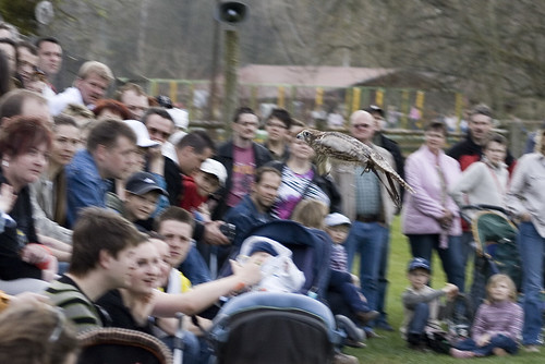 Wildpark Tambach Greifvögelflugshow