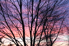 2006 01/06 Sunset (Cindy シンデイー) Tags: sunset sky landscape mo missouri goldstaraward