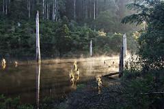Lake sunrise (Off ya chops) Tags: mist lake forest sunrise elizabeth australia victoria otways superbmasterpiece