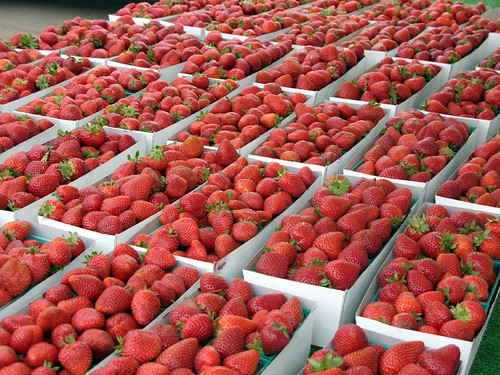 strawberries at north park market
