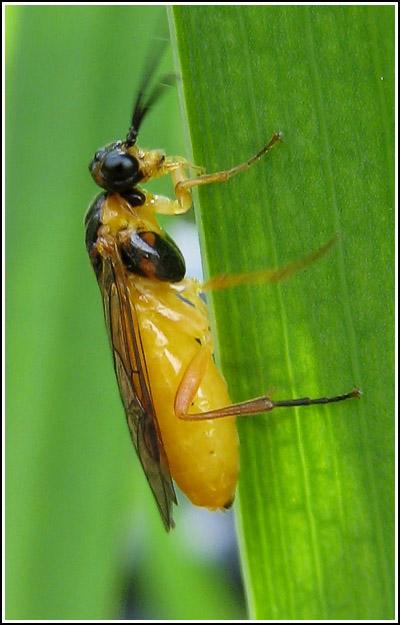 yellow bug crop copy