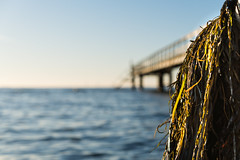 Lomma (Johan Holmquist) Tags: seagrass tång höst brygga tbryggan sea skåne öresund lomma sony sonya7r2 sweden sonya7ii zeiss