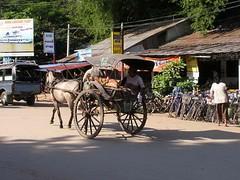Myanmar Birmania Mercados de 38 animales (Rafael Gomez - http://micamara.es) Tags: horses horse animals fauna de caballo caballos burma viajes myanmar animales birma mercados birmanie birmania حصان خيل فرس فرسان خشبي