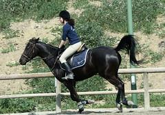 IMG_5642 (montalgeto) Tags: horse monica conny gallop