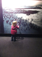 gracie sees the penguins