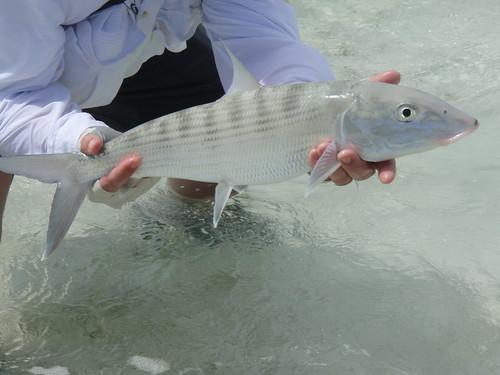 Bonefish - Mayaguana 2007