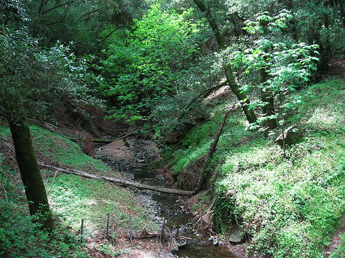 Guadalupe Creek