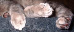 Xena's paws