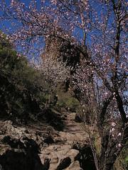 Bentayga y su entorno 40 Gran Canaria (Rafael Gomez - http://micamara.es) Tags: bentayga y su entorno isla gran canaria islas canarias roque senderismo de