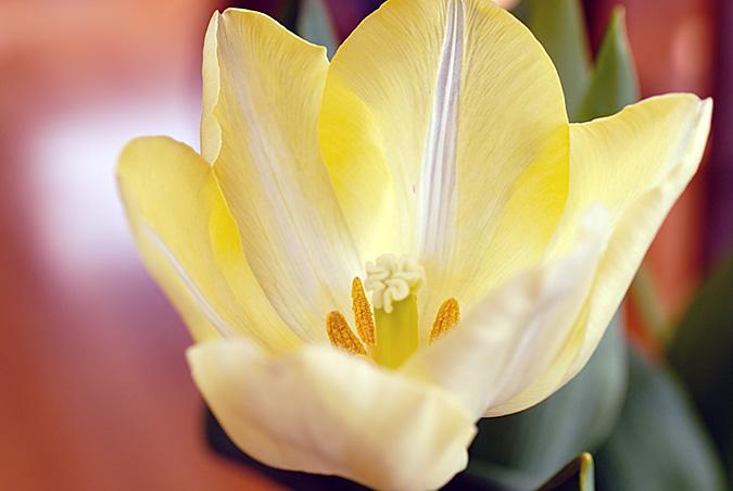 Flower 2439