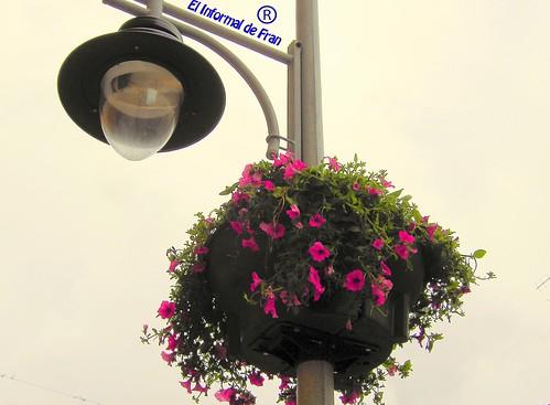Flores Farolas 1