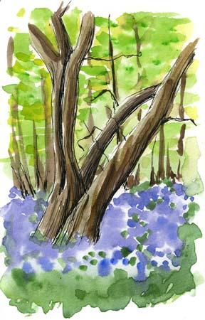 treesbluebells