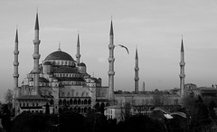 Istanbul Birds in Flight II (Oberazzi) Tags: bw monument birds turkey blind trkiye photographers landmark istanbul mosque trkei bluemosque sultanahmet turchia sultanahmed top20landmarks blindphotographers travelerphotos theuncommonspace