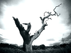 Petrified Tree B&W - by TJ_fluffy_online©