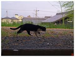 Today's Photo 070528 #04