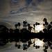 Palm Pond