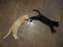 Dex + Fez (David Stroe) Tags: fez dex pisici motani