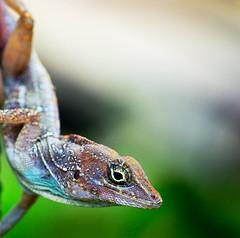 Gordon Gecko - by maessive