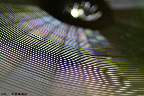 20070411_SpiderWeb_Abstract