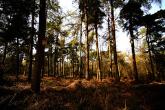 Standing still (Matt West) Tags: trees light woodland woods wildlife peaceful naturereserve shade bracken tranquil birdbox midlands shepshed whitwick leicstershire charnwoodlodge