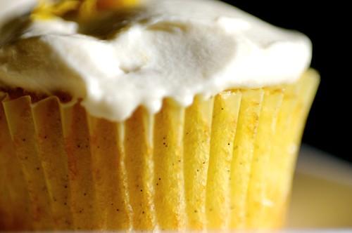 vanilla bean shows its face