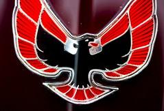 Firebird - by Thomas Hawk