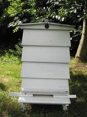 WBC hive