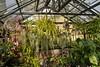 Crammed (brev99) Tags: greenhouse tulsagardencenter sigma1770os d7100 plants fan glass perfecteffects10 ononesoftware conservatory linnaeusteachinggarden
