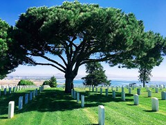Memorial Tree (Looking Glass) Tags: tree memorial gravestones fortrosecransnationalcemetery pointloma cabrillo sandiego ifttt instagram
