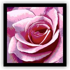 Pink Rose Study (gaspi *yg) Tags: colorslide scanned rose pink flower posterized photoshop gaspi