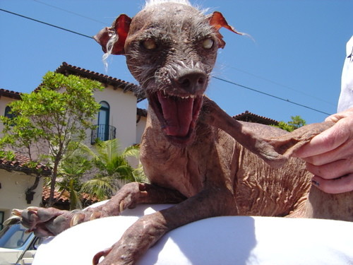 Конкурс Самая страшная собака в мире проводится ежегодно в Калифорнии.