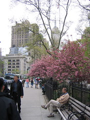 Madison Square Park by alistairmcmillan, on Flickr
