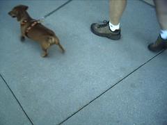 dog ass socks walking butt leg sidewalk leash harness belmar dogass wheresmybody