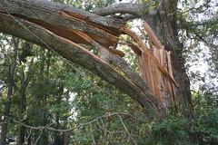 Splintered (G. J. Charlet III) Tags: hurricane hurricanekatrina clinton louisiana
