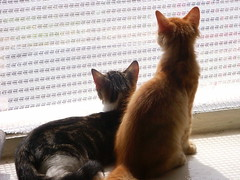 Cats again! - real title: Brothers (Jiobbe) Tags: 2005 summer cats cat arthur kitten milo catsandwindows