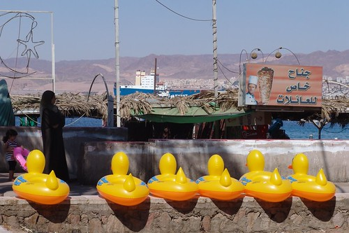 sitting ducks in Aqaba