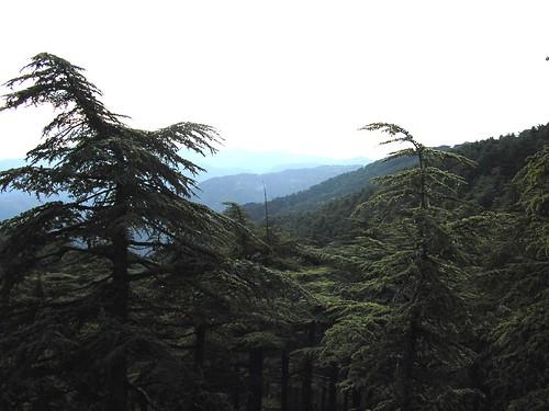 غابة الشريعة 40692549_45cc59085b