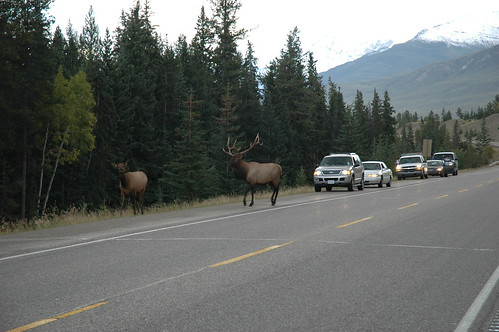 Canadian traffic jam (Photo by raindog)