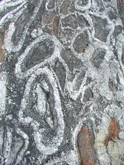 McAdam boulder: orbicular diorite