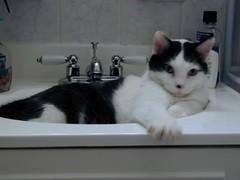 Spud in the Sink