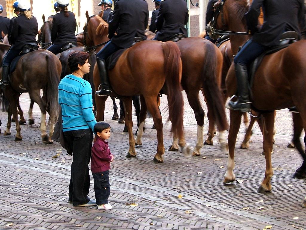 horses, binnenhof den haag