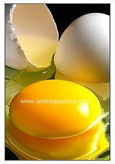 Egg... (Andrea Paccini) Tags: macro still 500v20f ding colorphotoaward