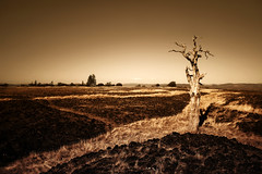 The Seed of Destruction (| HD |) Tags: old tree 20d nature look rock sepia oregon canon table dead natural path top peak southern valley hd kra052 creature darwish hamad