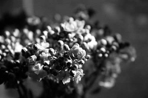 windowsill flowers