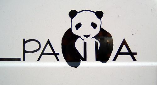 bella - my panda